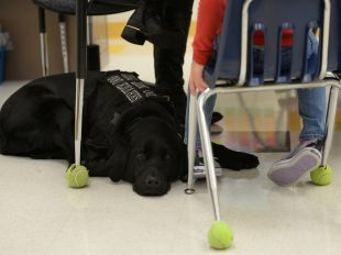Photo By Staff Sgt. Teresa Cleveland | Hope, a service dog, lies at the feet of AudreeAna Johns, age six, daughter of U.S. Army Sgt. Matthew Johns, 221st Military Police Detachment military police officer, at Gen. Stanford Elementary School at Joint Base Langley-Eustis, Va., Jan. 24, 2017. Hope is a trained seizure alert, stability and anxiety service dog who goes to school with AudreeAna, accompanies her on doctors' visits and sleeps near her, alerting those nearby of issues. (U.S. Air Force photo by Staff Sgt. Teresa J. Cleveland)